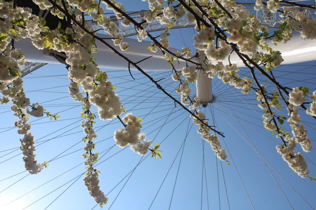 Blossoming London Eye