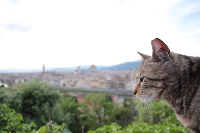 Cat in Florence